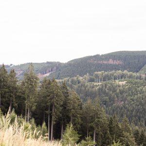 bergen en bossen